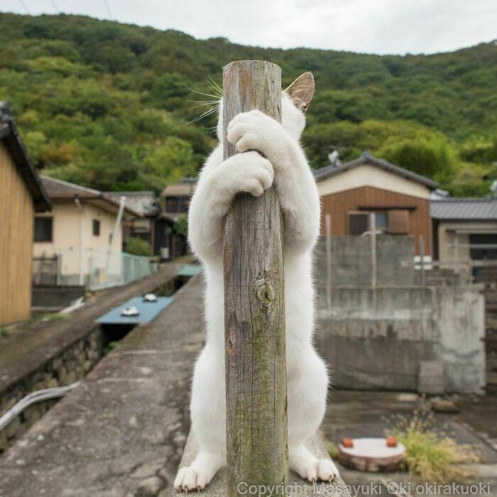 40 personalidades únicas de gatos de rua capturadas por este fotógrafo japonês 14