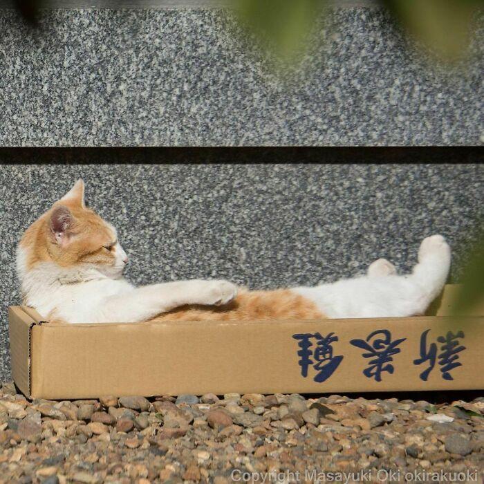 40 personalidades únicas de gatos de rua capturadas por este fotógrafo japonês 15