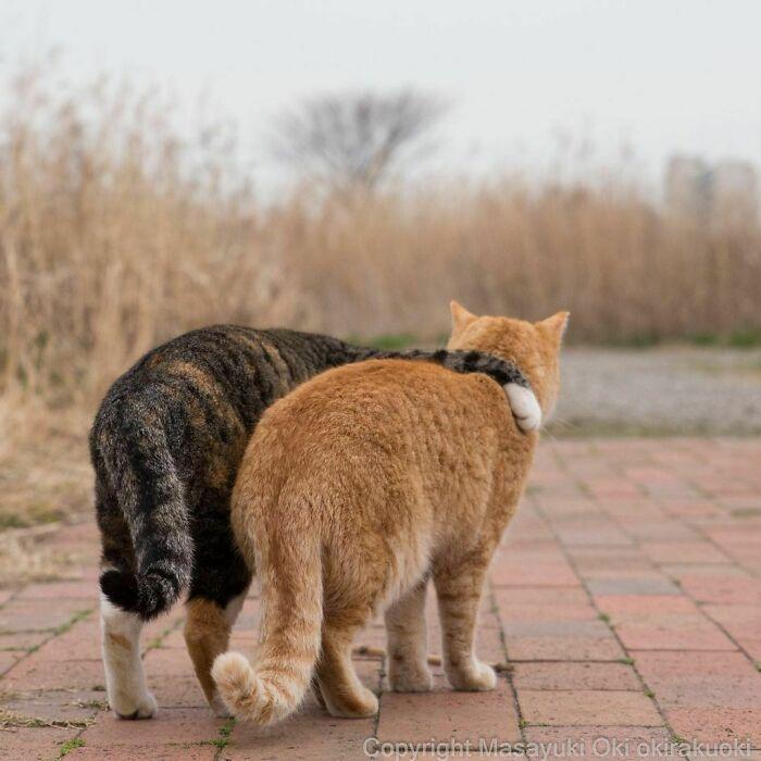 40 personalidades únicas de gatos de rua capturadas por este fotógrafo japonês 16