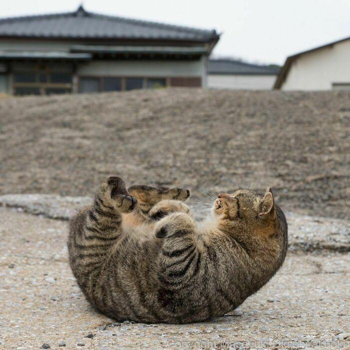 40 personalidades únicas de gatos de rua capturadas por este fotógrafo japonês 17