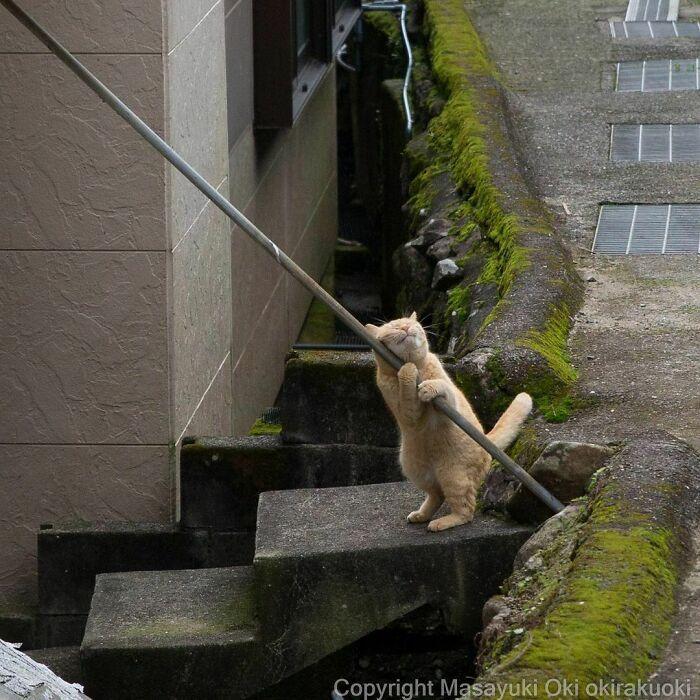 40 personalidades únicas de gatos de rua capturadas por este fotógrafo japonês 19