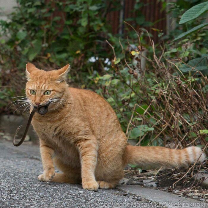 40 personalidades únicas de gatos de rua capturadas por este fotógrafo japonês 21