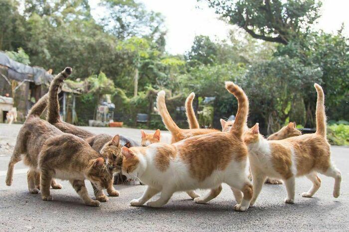 40 personalidades únicas de gatos de rua capturadas por este fotógrafo japonês 26
