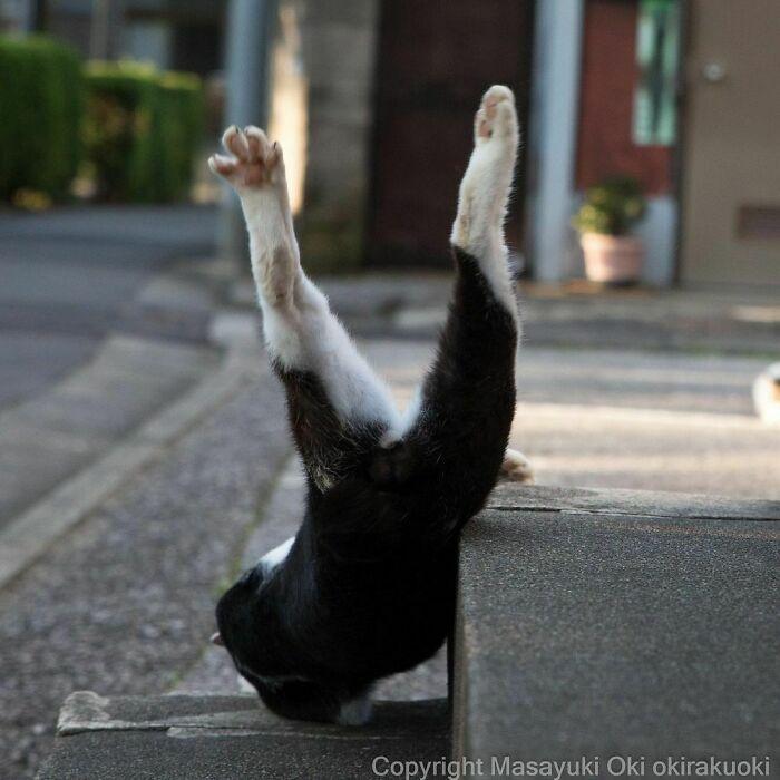 40 personalidades únicas de gatos de rua capturadas por este fotógrafo japonês 28