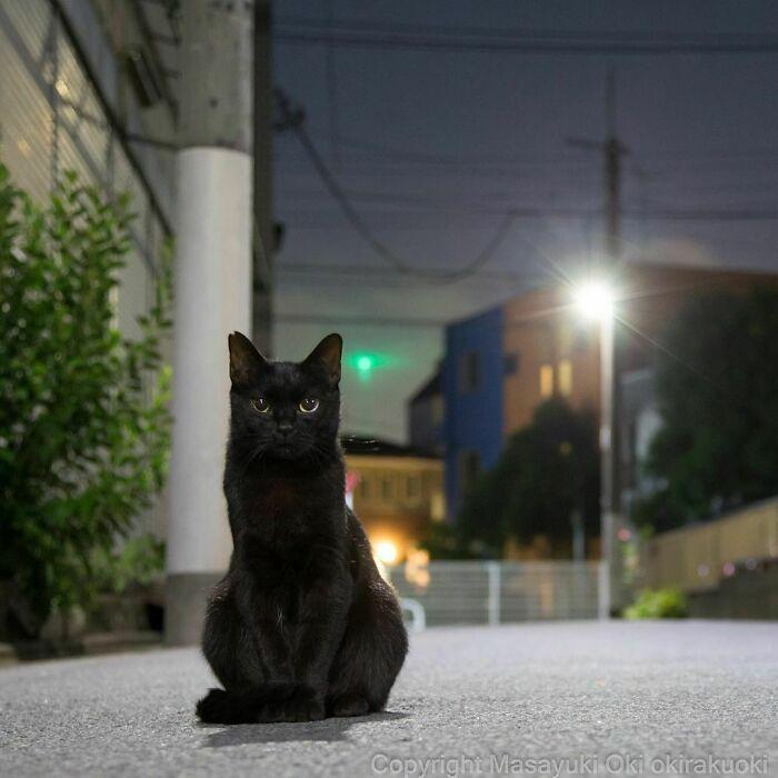 40 personalidades únicas de gatos de rua capturadas por este fotógrafo japonês 30