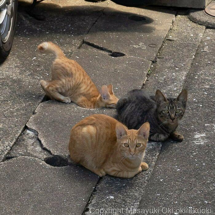 40 personalidades únicas de gatos de rua capturadas por este fotógrafo japonês 31