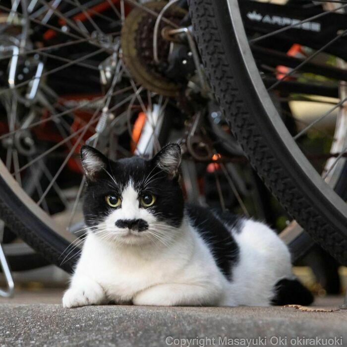 40 personalidades únicas de gatos de rua capturadas por este fotógrafo japonês 32
