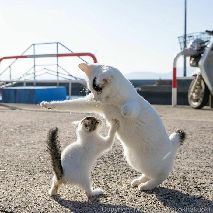 40 personalidades únicas de gatos de rua capturadas por este fotógrafo japonês 33