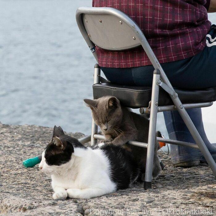 40 personalidades únicas de gatos de rua capturadas por este fotógrafo japonês 34