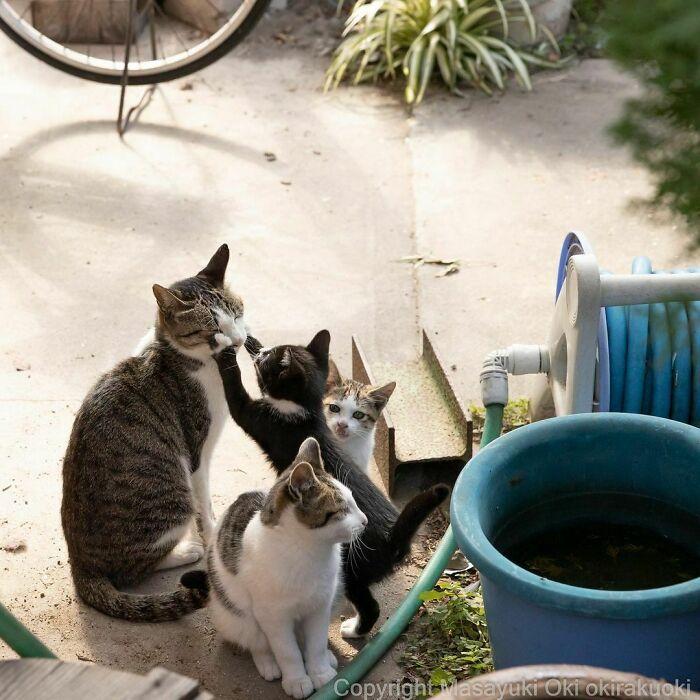 40 personalidades únicas de gatos de rua capturadas por este fotógrafo japonês 35
