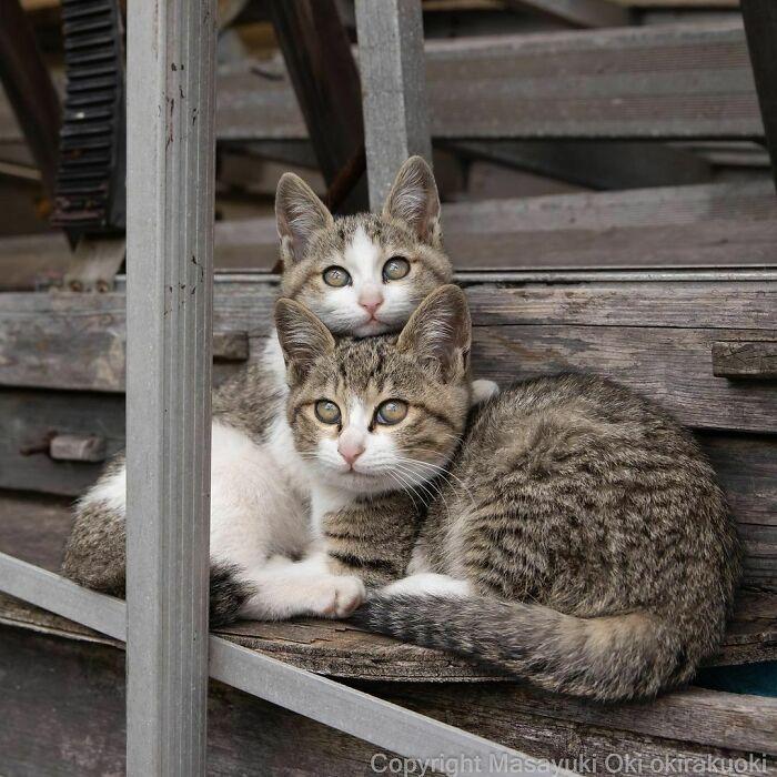 40 personalidades únicas de gatos de rua capturadas por este fotógrafo japonês 36