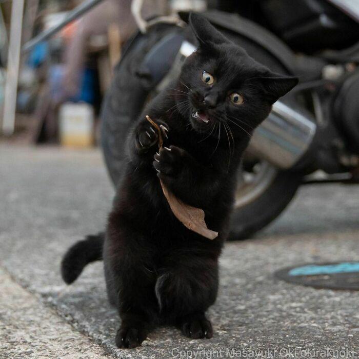 40 personalidades únicas de gatos de rua capturadas por este fotógrafo japonês 37