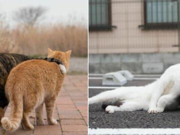 40 personalidades únicas de gatos de rua capturadas por este fotógrafo japonês 3