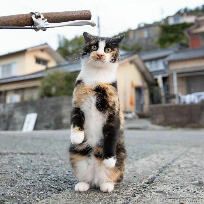 40 personalidades únicas de gatos de rua capturadas por este fotógrafo japonês 38