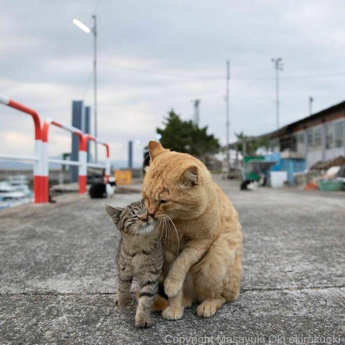 40 personalidades únicas de gatos de rua capturadas por este fotógrafo japonês 39