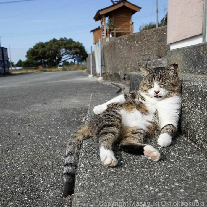 40 personalidades únicas de gatos de rua capturadas por este fotógrafo japonês 40