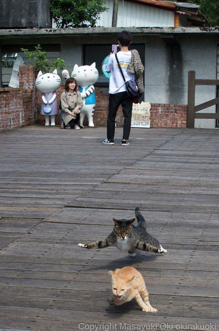 40 personalidades únicas de gatos de rua capturadas por este fotógrafo japonês 41