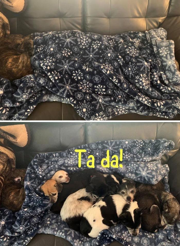 Pessoas postam fotos de cachorros escondidos e a dificuldade de encontrá-los varia de 0 a 100 6