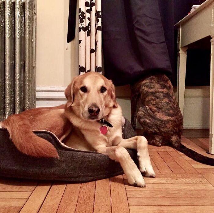 Pessoas postam fotos de cachorros escondidos e a dificuldade de encontrá-los varia de 0 a 100 8