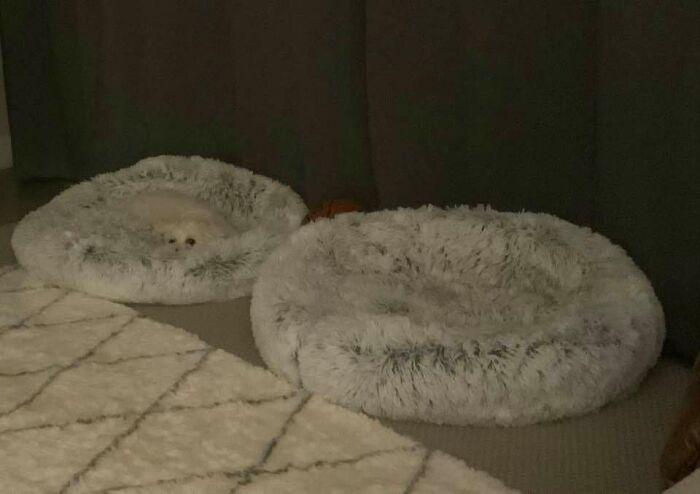 Pessoas postam fotos de cachorros escondidos e a dificuldade de encontrá-los varia de 0 a 100 12