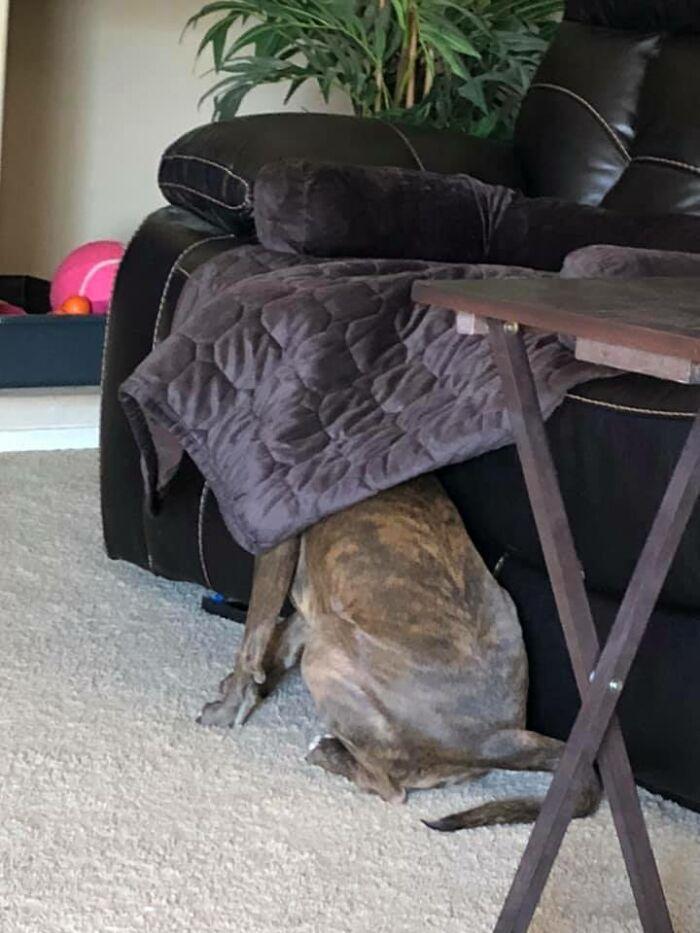 Pessoas postam fotos de cachorros escondidos e a dificuldade de encontrá-los varia de 0 a 100 13