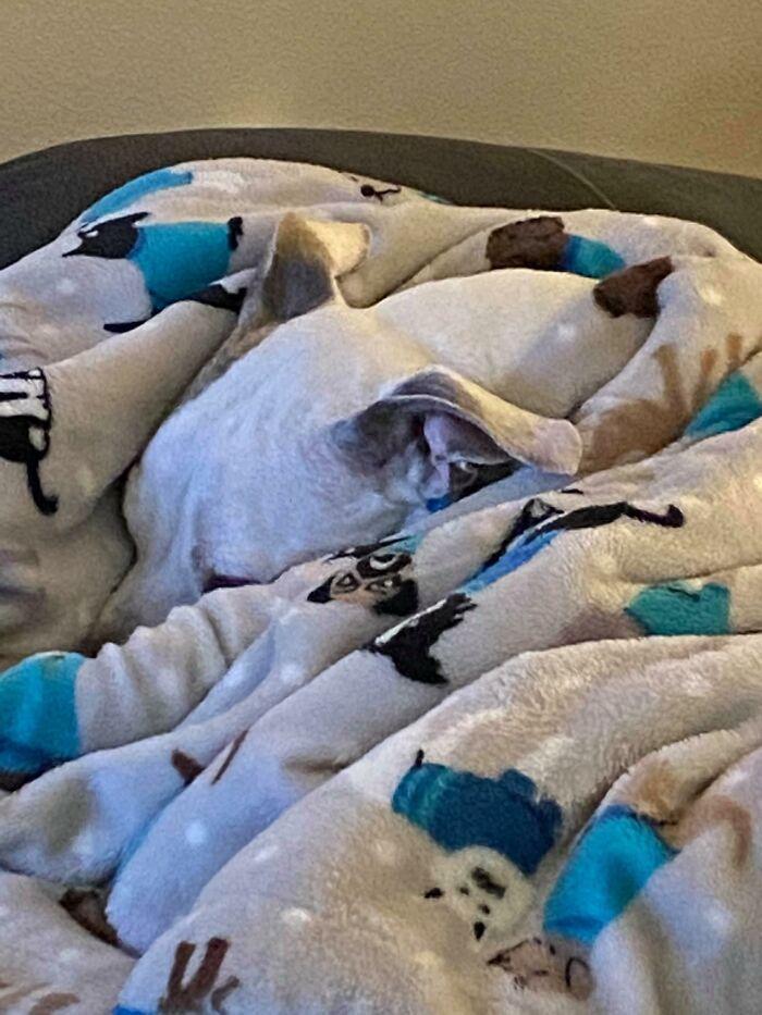 Pessoas postam fotos de cachorros escondidos e a dificuldade de encontrá-los varia de 0 a 100 24