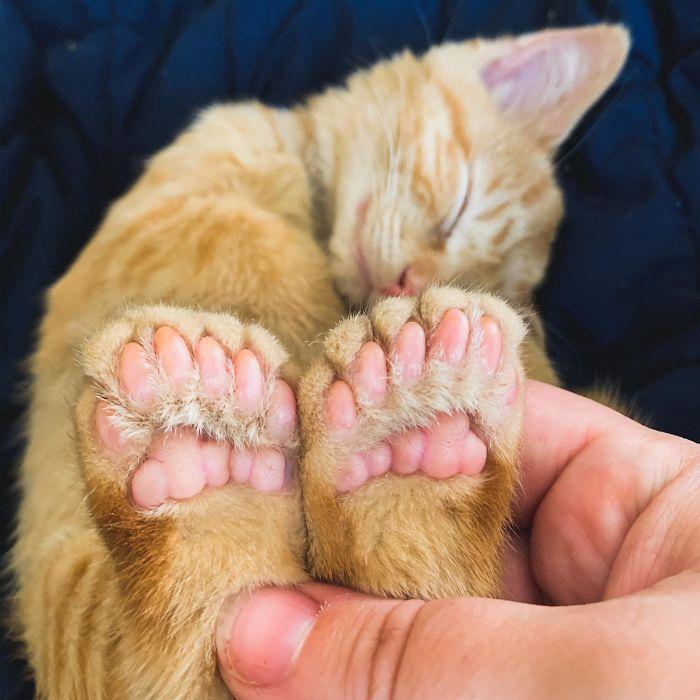 34 animais de estimação cuja genética os tornou únicos 6