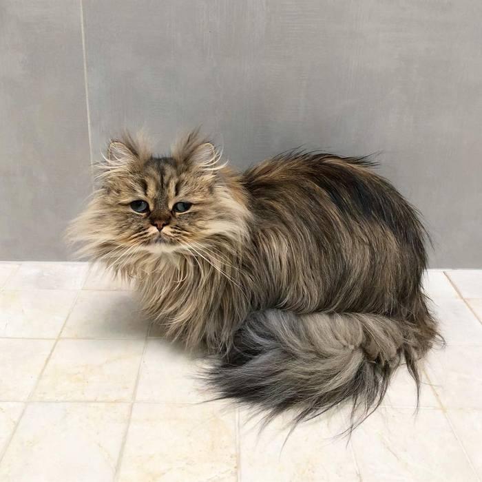 Conheça o gatinho Barnaby que sempre está com cara de cansado 3