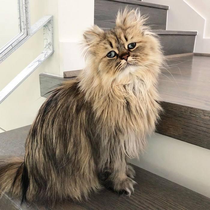 Conheça o gatinho Barnaby que sempre está com cara de cansado 5