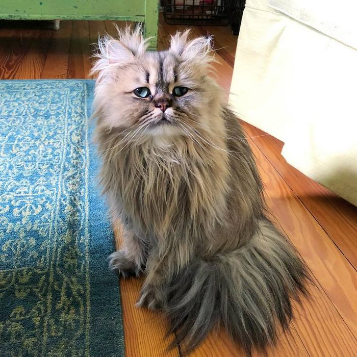 Conheça o gatinho Barnaby que sempre está com cara de cansado 6