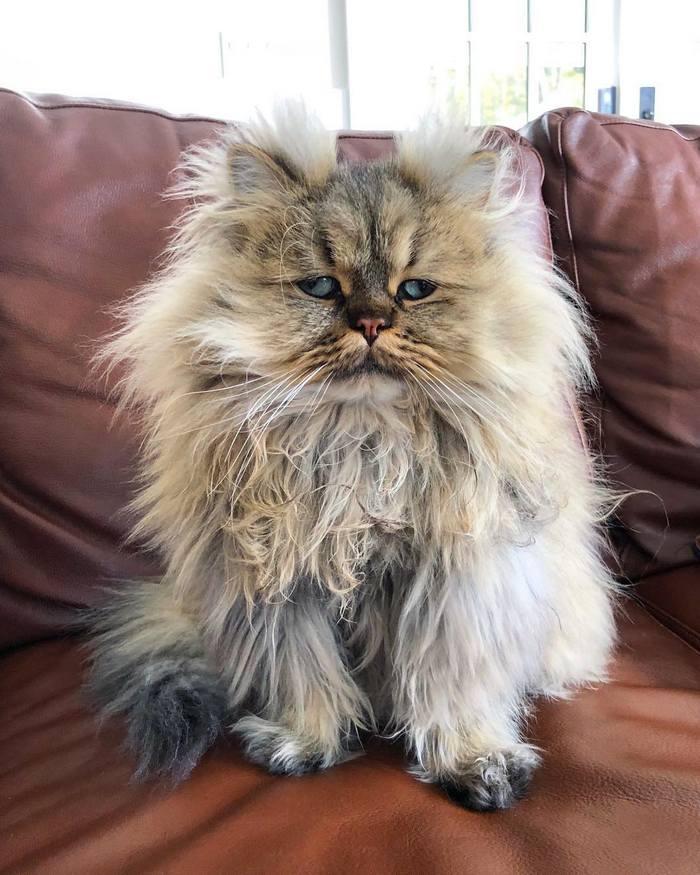 Conheça o gatinho Barnaby que sempre está com cara de cansado 7