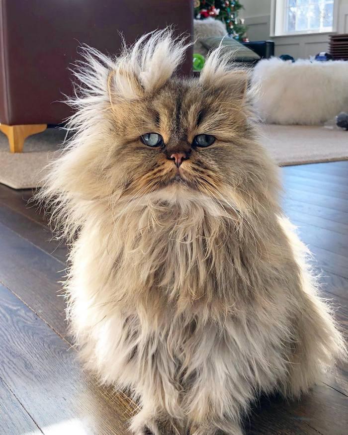 Conheça o gatinho Barnaby que sempre está com cara de cansado 8