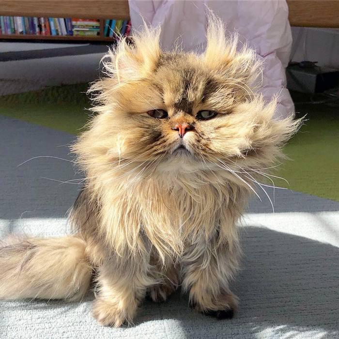 Conheça o gatinho Barnaby que sempre está com cara de cansado 9