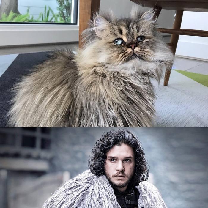Conheça o gatinho Barnaby que sempre está com cara de cansado 10