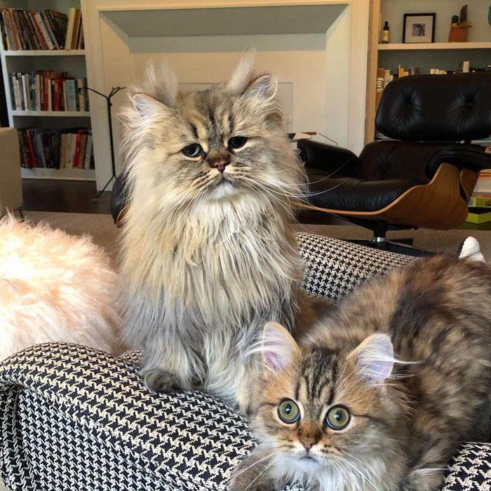 Conheça o gatinho Barnaby que sempre está com cara de cansado 11