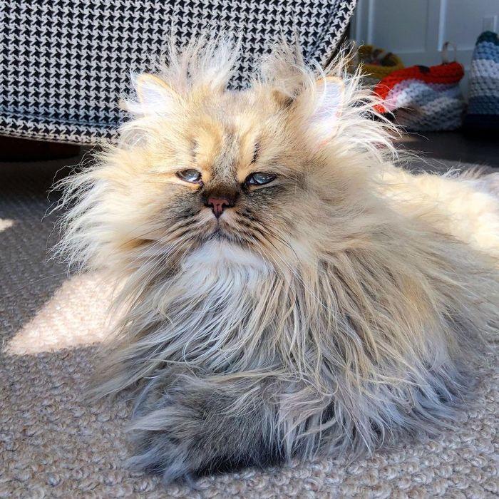 Conheça o gatinho Barnaby que sempre está com cara de cansado 12