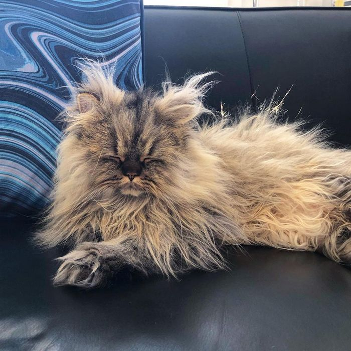 Conheça o gatinho Barnaby que sempre está com cara de cansado 13