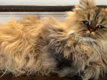 Conheça o gatinho Barnaby que sempre está com cara de cansado 4