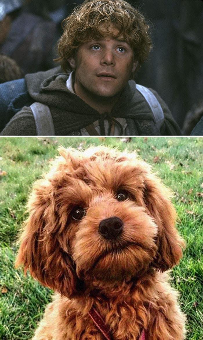E se os personagens do filme Senhor dos anéis fosse todos cães? 2