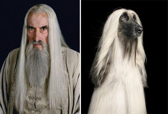 E se os personagens do filme Senhor dos anéis fosse todos cães? 3