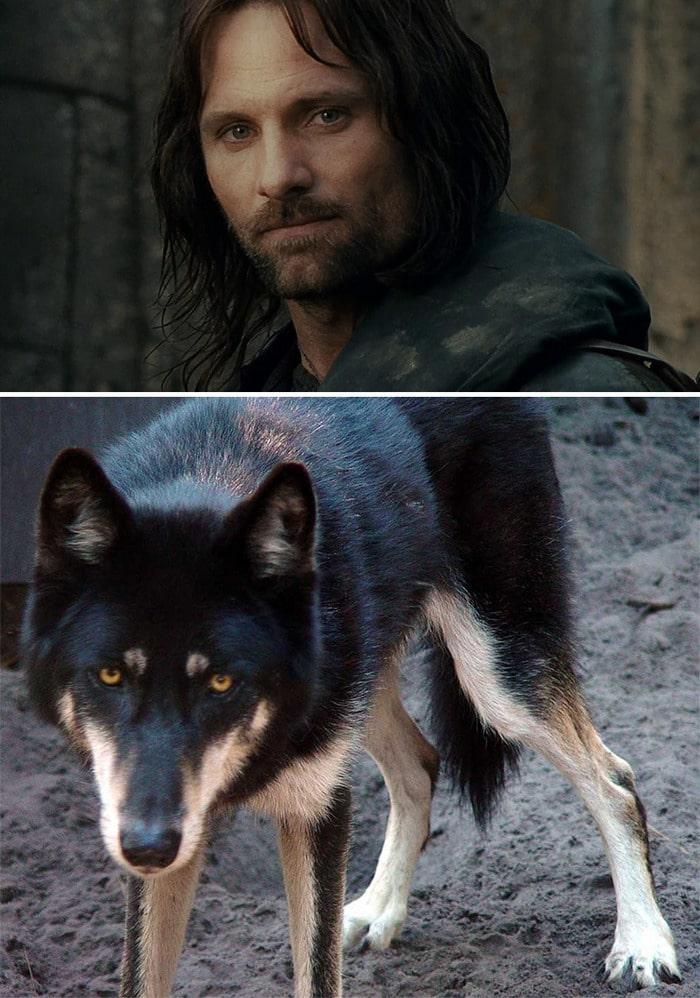 E se os personagens do filme Senhor dos anéis fosse todos cães? 6