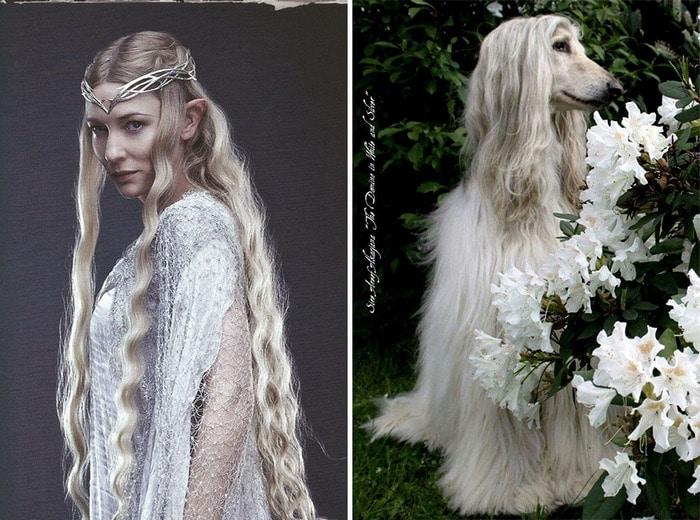 E se os personagens do filme Senhor dos anéis fosse todos cães? 7