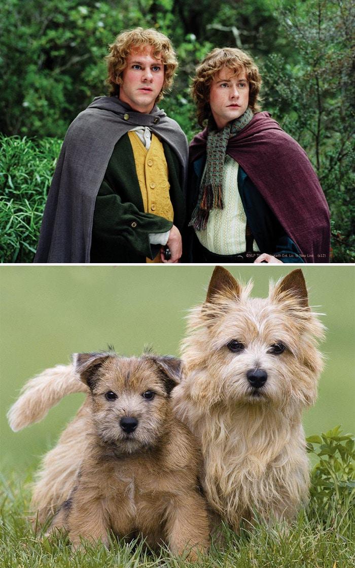 E se os personagens do filme Senhor dos anéis fosse todos cães? 8