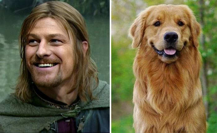 E se os personagens do filme Senhor dos anéis fosse todos cães? 9