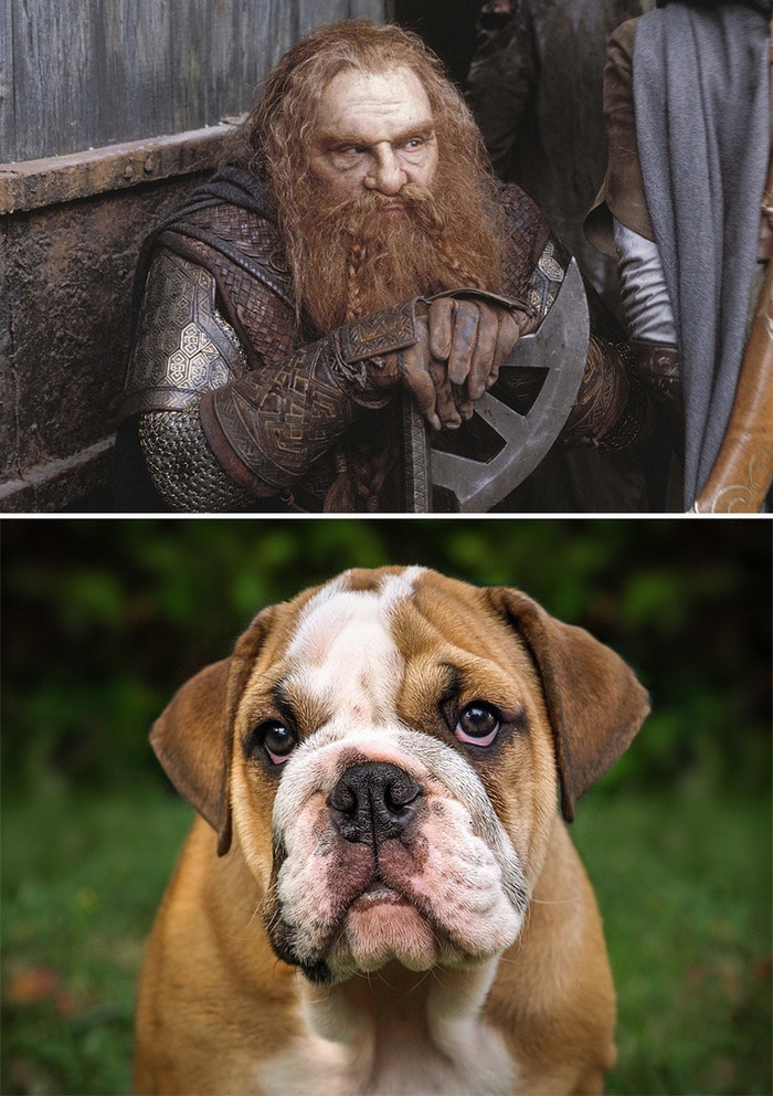 E se os personagens do filme Senhor dos anéis fosse todos cães? 10