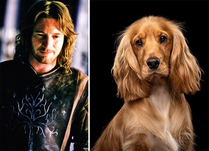 E se os personagens do filme Senhor dos anéis fosse todos cães? 11