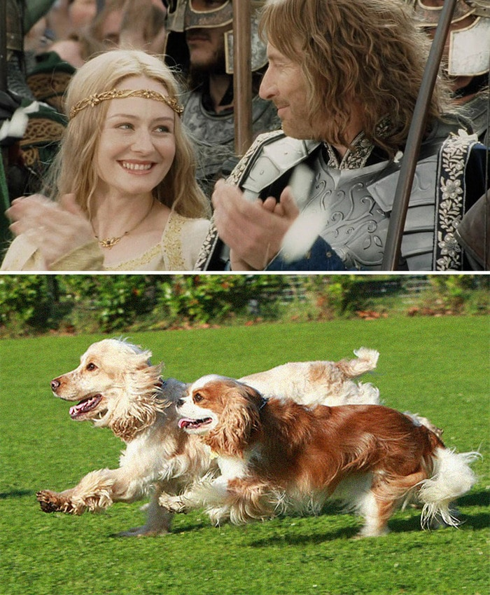 E se os personagens do filme Senhor dos anéis fosse todos cães? 12