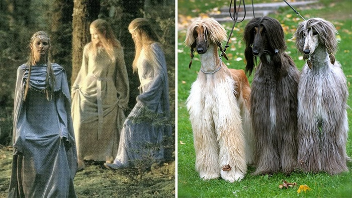 E se os personagens do filme Senhor dos anéis fosse todos cães? 13