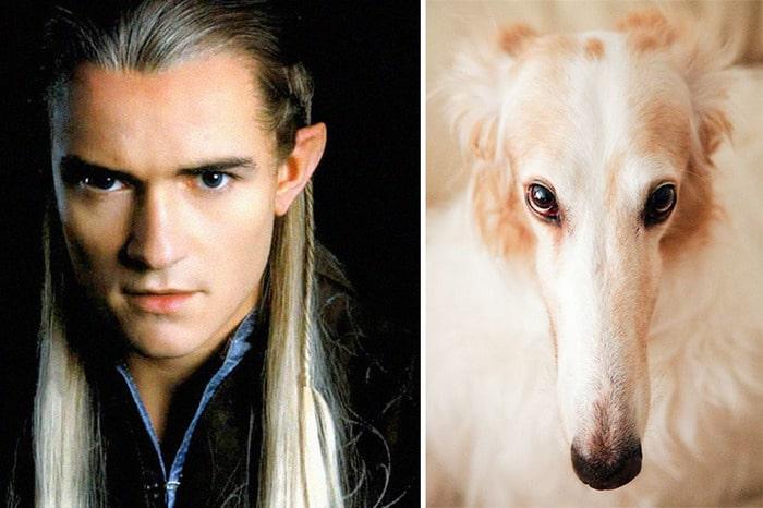 E se os personagens do filme Senhor dos anéis fosse todos cães? 14