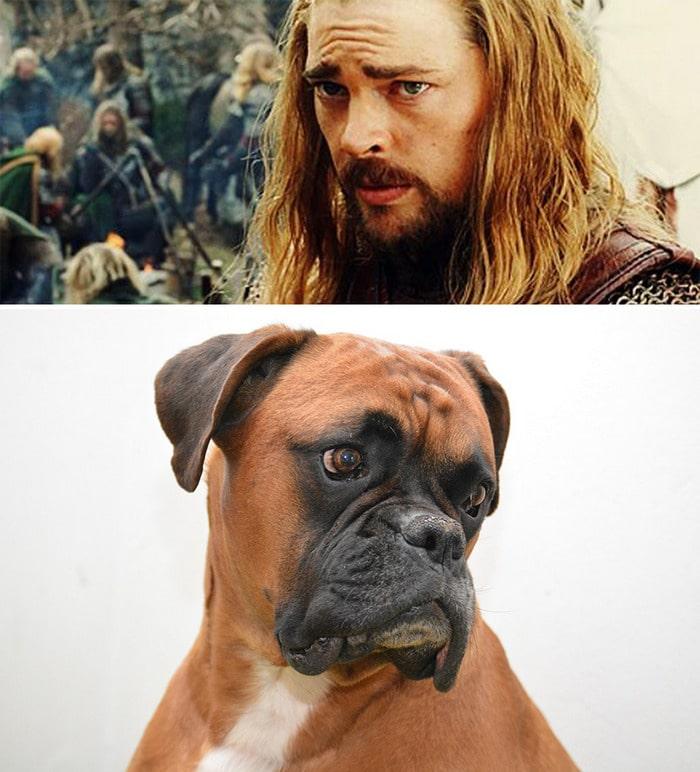 E se os personagens do filme Senhor dos anéis fosse todos cães? 15
